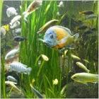 fish_water_animal_237751